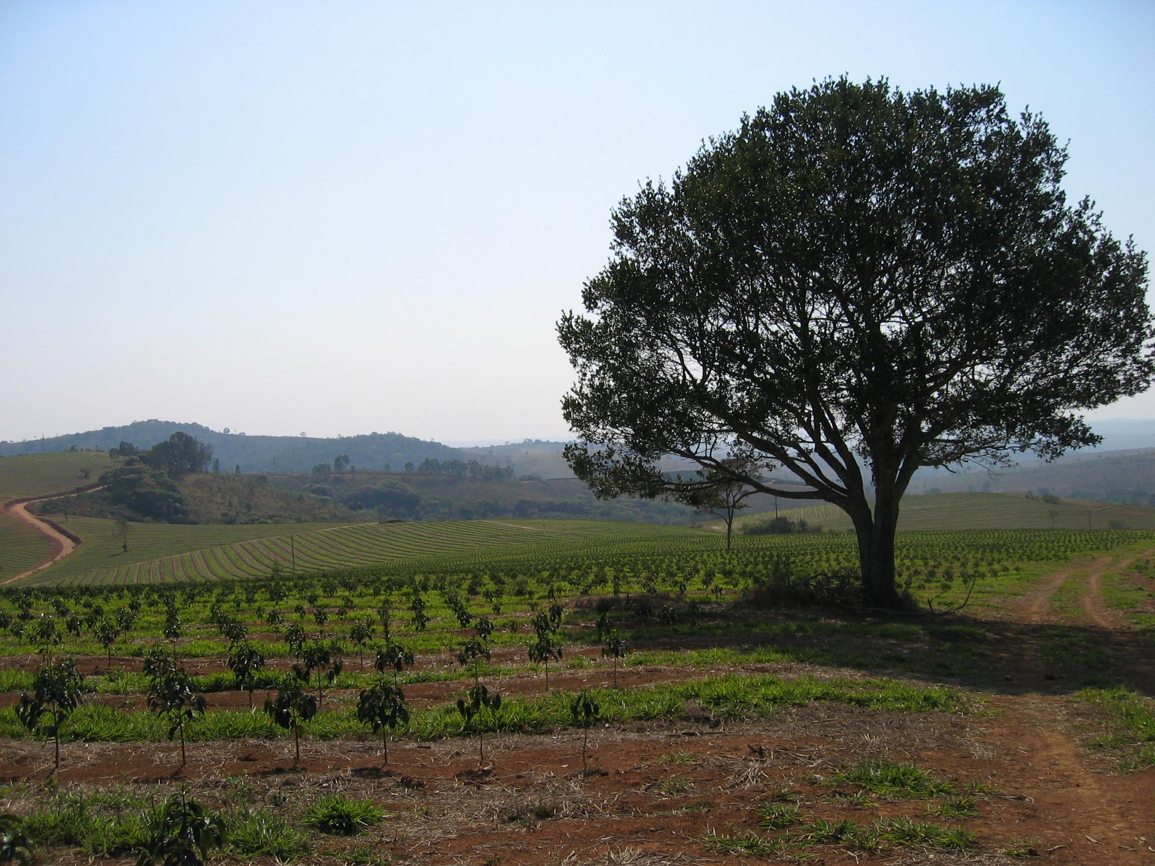 Fazenda-Samambaia4